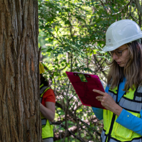 Featured image for Jana Morgan Receives TRAQ (Tree Risk Assessment Qualification) Renewal